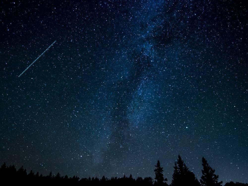 night sky with pine trees