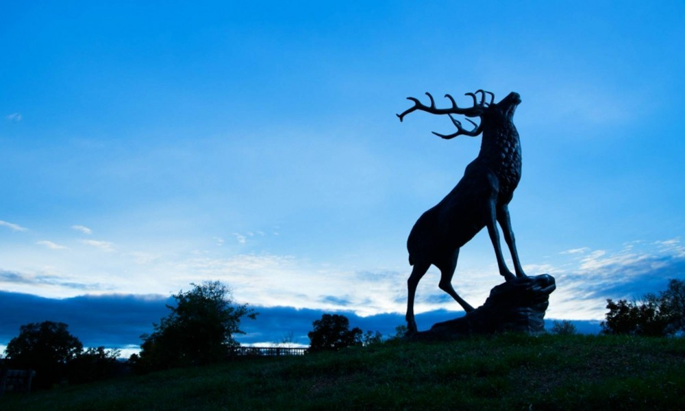 elk statue at night